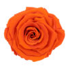 atomic-orange