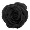 black-onyx