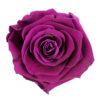 cherry-purple
